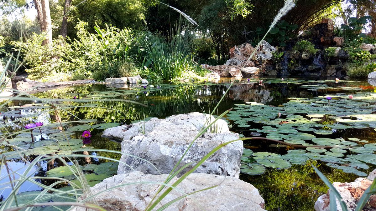 בריכת נוי המעוצבת כאגם במשק