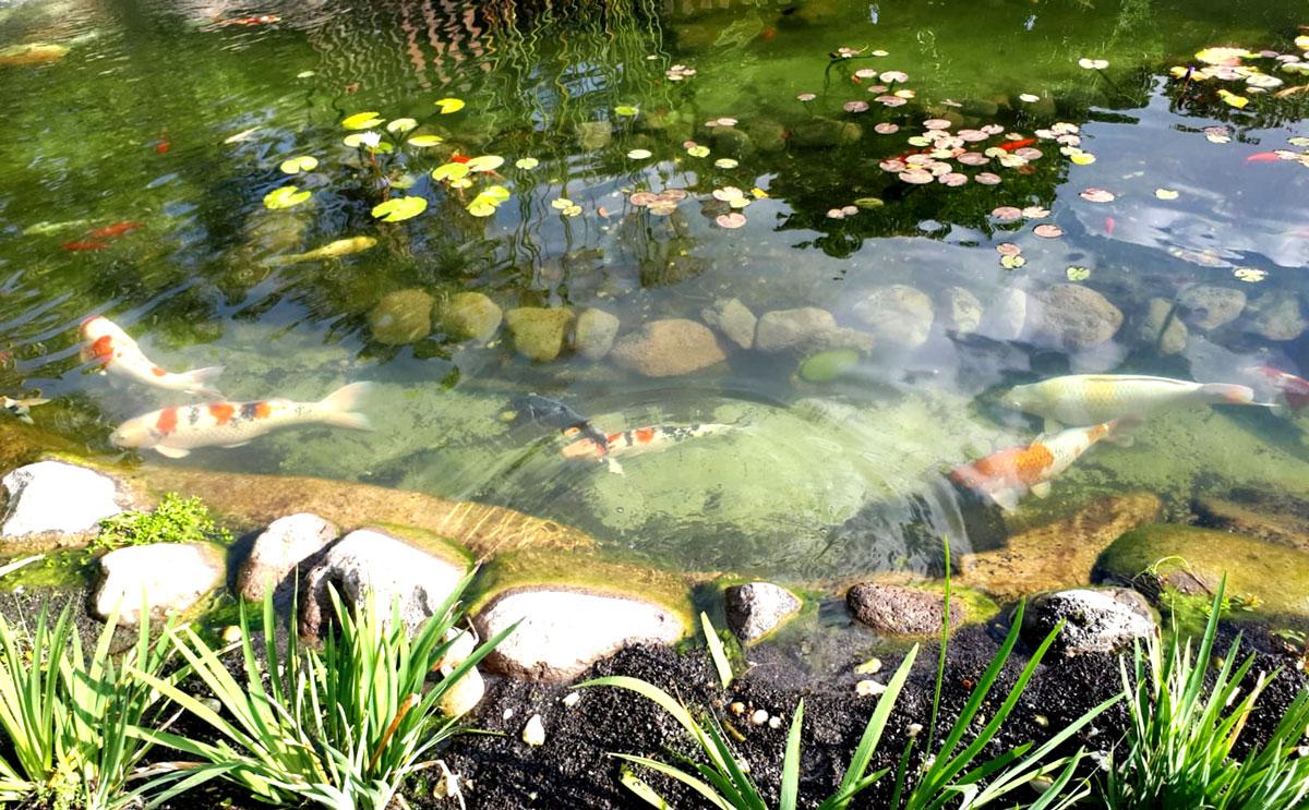 אגם לדגי קוי במשק