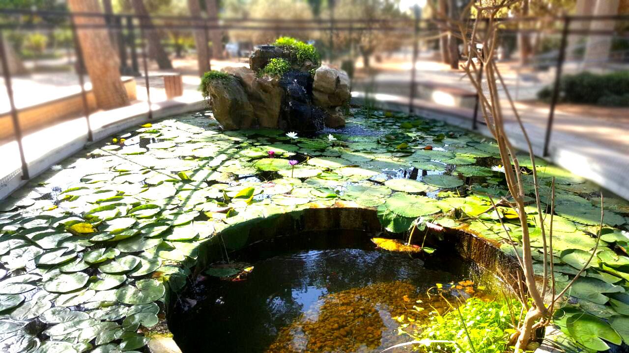 בריכת נוי  גן ציבורי עומר