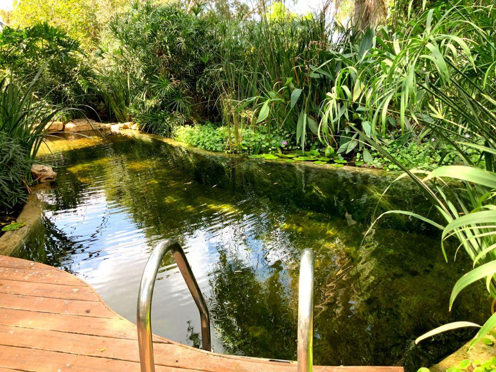 הבריכה האקולוגית של גולדי